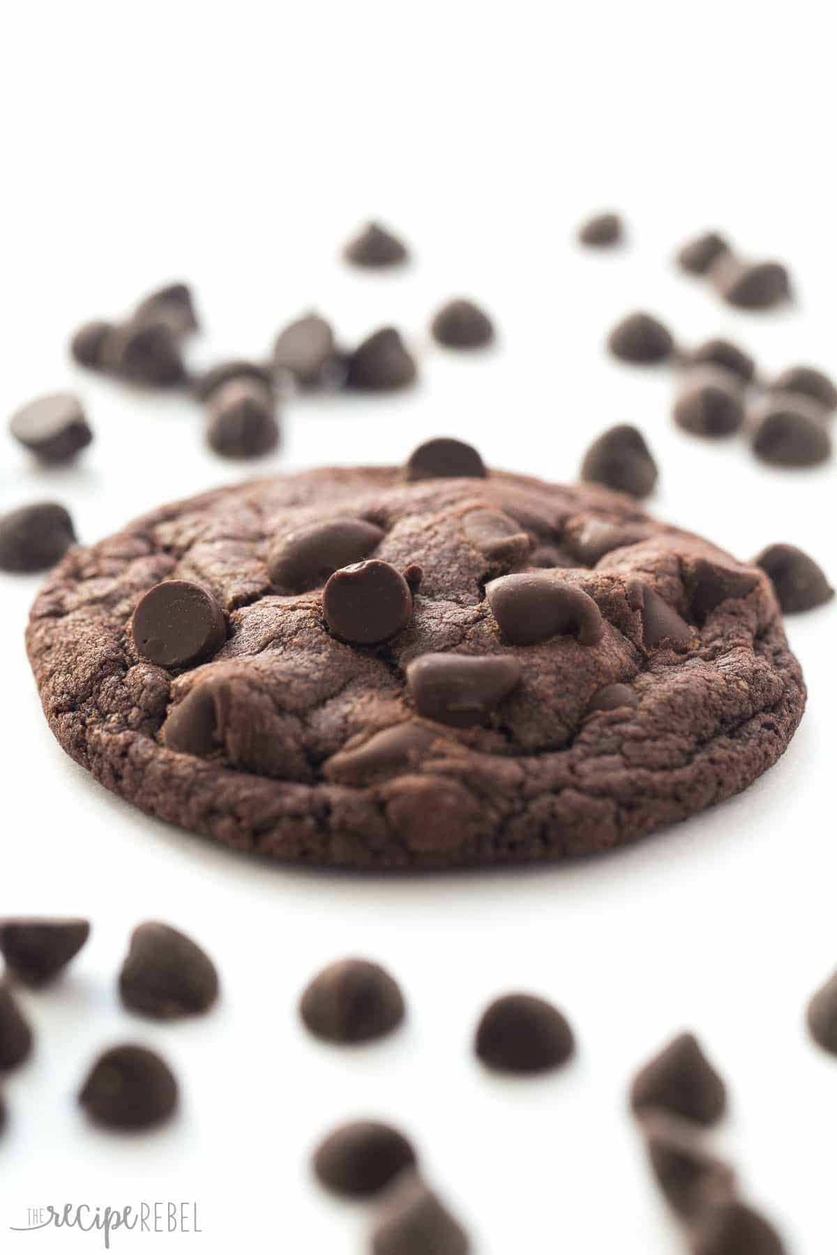 one double chocolate chip cookie up close on white background