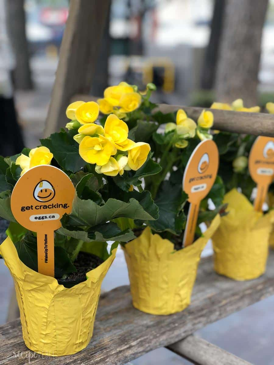 yellow potted flower favors for the wake up to yellow event winnipeg