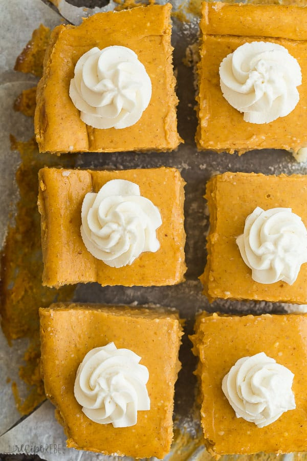 pumpkin cheesecake bars overhead cut into squares with one swirl of whipped cream in the center