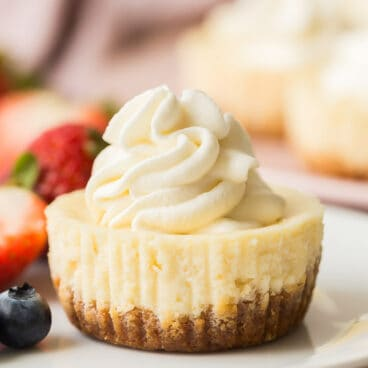 one cheesecake cupcake close up on white plate with whipped cream